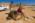 Arabie Saoudite. Madâin Sâlih. Mission archéologique franco-saoudienne dans l'antique cité nabatéenne de Hégra. Laïla Nehmé, co-directrice de la mission,  fouillant devant le Qasr al-Bint.