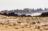 Arabie Saoudite. Madâin Sâlih. Mission archéologique franco-saoudienne sur le site de l'antique cité nabatéenne de Hégra. Au 2nd plan  le massif rocheux (grès) Jabal Ithlib qui abrite le sanctuaire religieux Nabatéens