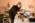 Stradivarius la fin de la legende. Institut Jean le Rond d'Alembert Equipe LAM(Lutheries - Acoustique - Musique) UPMC-CNRS. Claudia Fritz (Chargée de recherche CNRS en acoustique musicale). Mesures mécaniques sur des violons. La réponse vibratoire du violon est mesurée à l'aide d'un marteau d'impact miniature, qui excite le chevalet à un coin et d'un vibromètre laser enregistrant la vitesse de vibration du chevalet à son autre coin. Cette mesure caractérise partiellement le comportement vibratoire du violon, indépendamment du violoniste. L'objectif est d'étudier la qualité des violons, telle qu'elle est perçue par les violonistes et les auditeurs, pour la mettre ensuite en relation avec leurs propriétés vibratoires et acoustiques. EN: Institut Jean le Rond d'Alembert LAM Team. Claudia Fritz (Researcher in musical acoustic at CNRS) is measuring, using a hammer and a laser vibrometer        the vibrational behavior of the violin regardless of violinist. The goal is to study the quality of violins, as perceived by violinists and auditors, and put it in relation to their vibration and acoustic properties.