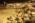 Aéroport Charles-de-Gaulle. La zone de fret. Avion Cargo de la société Fedex.  Charles-de-Gaulle Airport, France. The freight zone. Transport plane for FedEx