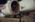 Aéroport Charles-de-Gaulle. Pilote effectuant la visite technique de son avion avant un vol de transport de fret express.  Charles-de-Gaulle Airport, France. Pilot carrying the technical inspection of his aircraft before taking off for an express delivery transport flight.